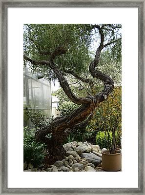 American Zen Framed Print