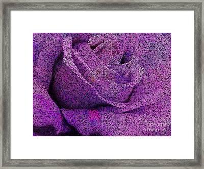 Amethyst Rose Disintegrates Framed Print by Elizabeth McTaggart