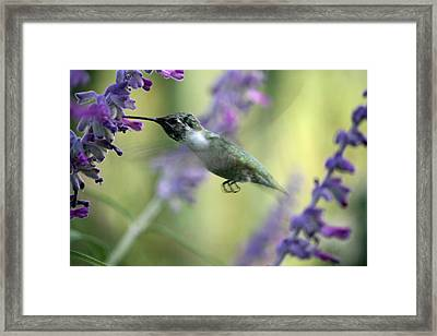 Amidst The Flowers Framed Print by Wendi Matson