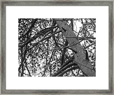 Amidst The Pines Is The Barrens Framed Print by Mother Nature