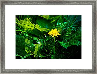 Amidst The Weeds Framed Print