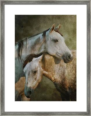 Amigos Framed Print by Ron  McGinnis