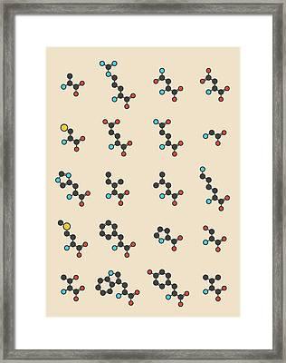 Amino Acids Molecules Framed Print by Molekuul