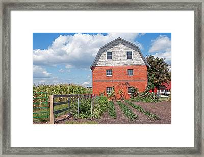 Amish Barn And Garden Framed Print by David Arment