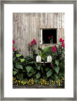 Amish Barn Framed Print by Diane Diederich