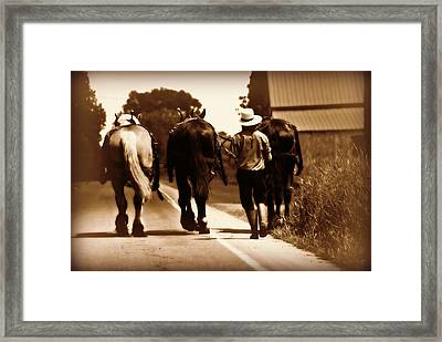 Amish Boy Farmer Framed Print
