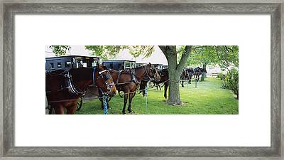 Amish Buggies And Horses Parked Framed Print