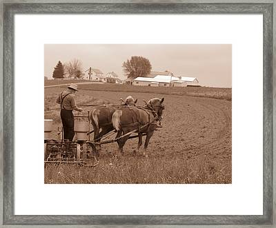 Amish Farmer Framed Print by Janet Pugh