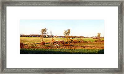 Amish Farmer Plowing A Field, Usa Framed Print