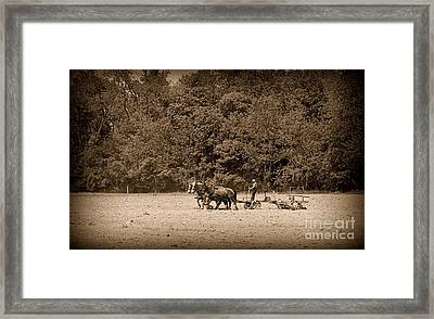 Amish Farmer Tilling The Fields In Black And White Framed Print by Paul Ward