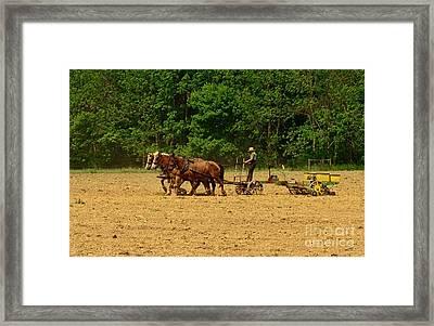 Amish Farmer Tilling The Fields Framed Print by Paul Ward