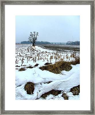 Amish Field In Winter Framed Print