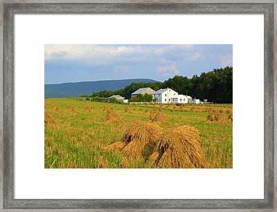 Amish Harvest #1 - Milroy Pa Framed Print