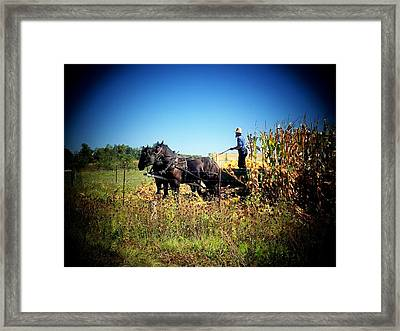 Amish Harvest Framed Print by Michael L Kimble