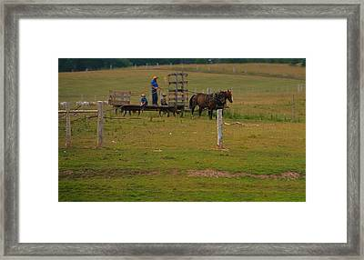 Amish Man And Two Sons On The Farm Framed Print by Dan Sproul