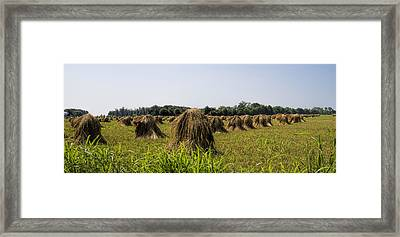 Amish Wheat Stacks Framed Print by Kathy Clark