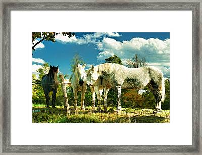 Amish Work Horses Framed Print by Dick Wood