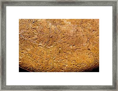 Ammonite Fossil Shell Framed Print by Pascal Goetgheluck/science Photo Library