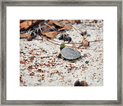 Among Acorns Framed Print by Al Powell Photography USA