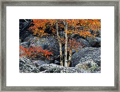 Among Boulders Framed Print