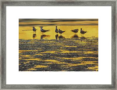 Among Friends Framed Print by Marvin Spates