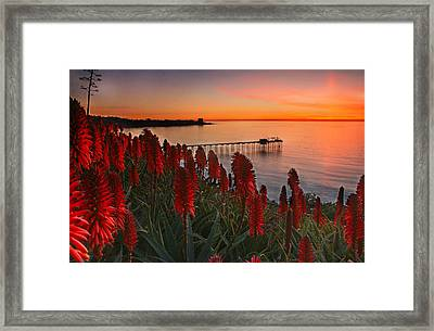 Among The Aloe Framed Print