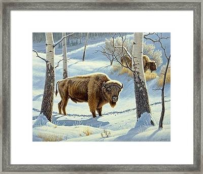 Among The Aspens- Buffalo Framed Print by Paul Krapf