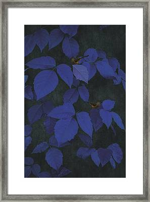 Among The Blue Leaves Framed Print