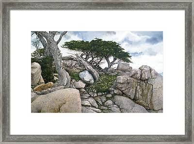 Among The Cypress Framed Print by Tom Wooldridge