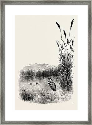 Among The Fens, Uk Framed Print