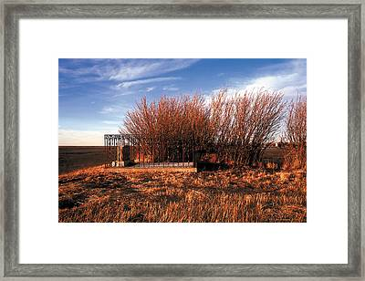 Among The Fields Of Barley Framed Print by Terry Reynoldson