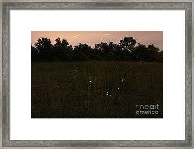 Among The Fireflies One Magical Night Framed Print by Adam Long