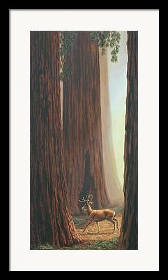 Giant Sequoia Framed Prints