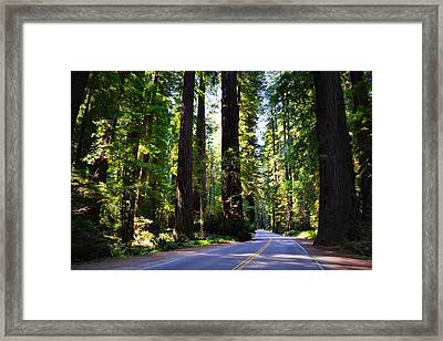Among The Giants Framed Print by Michelle Calkins