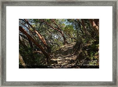 Among The Madrone Framed Print