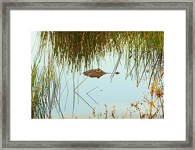 Among The Reeds Framed Print by Lynda Dawson-Youngclaus