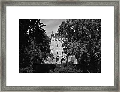 Among The Trees Framed Print