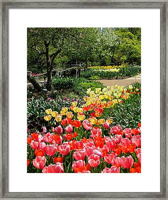 Framed Print featuring the photograph Among Tulips by John Freidenberg