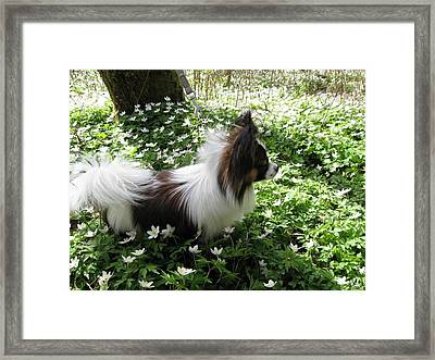 Among White Anemones Framed Print by Gun Legler