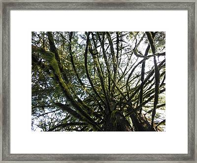 Amongst The Branches Framed Print by Lori Thompson