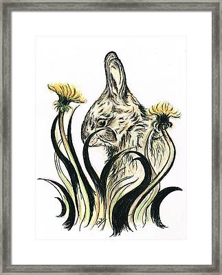 Rabbit- Amongst The Dandelions Framed Print