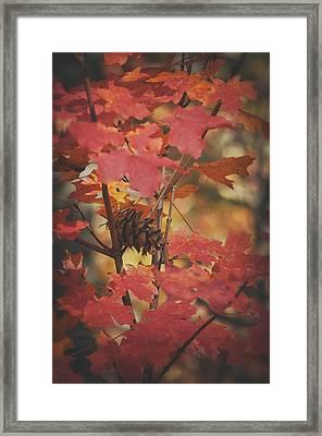 Amongst The Maple Leaves  Framed Print by Saija  Lehtonen