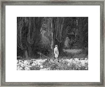 Amongst The Pumpkins Framed Print