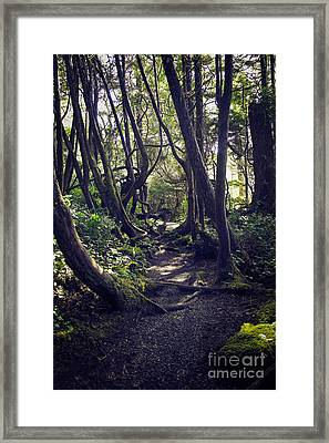 Amongst The Trees Framed Print by Carrie Cole