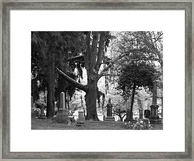 Amongst The Trees Framed Print