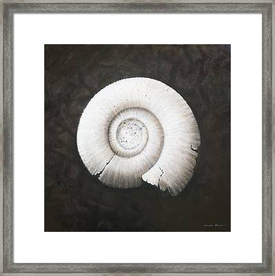 Amononite Framed Print by Lincoln Seligman