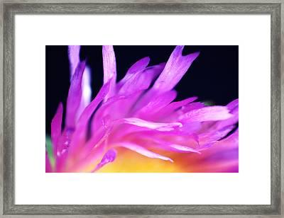 Amore Framed Print by Ange Sylvestri