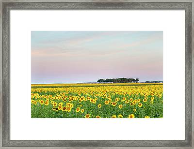 Amtrak Train Passes By Field Framed Print