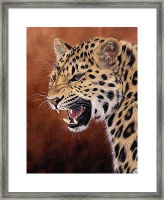 Amur Leopard Painting Framed Print by Rachel Stribbling