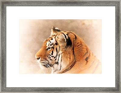Amur Tiger Framed Print by Karol Livote